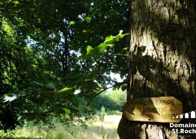 Pancarte observation nature Couvin Saint-Roch 07-2019 copy